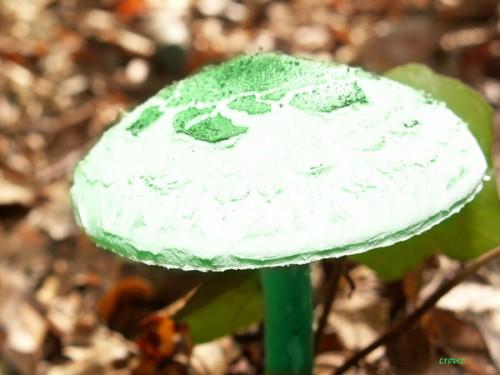 Champignon-Vert ET BLANS.jpg